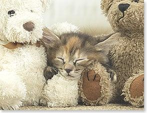 Blank Note Card Set 8 of 1 design: Kitten between two teddy bears